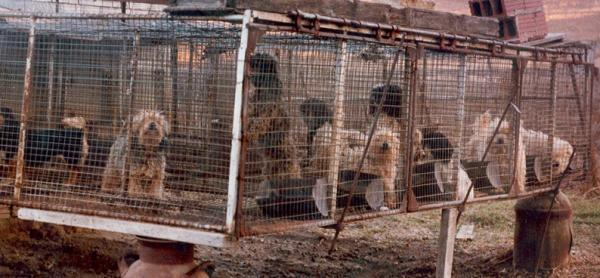 puppy_mill_big_cage
