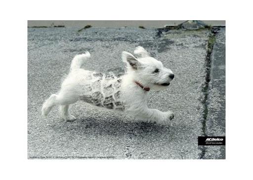 orsontsp-auto-dog-small-73564