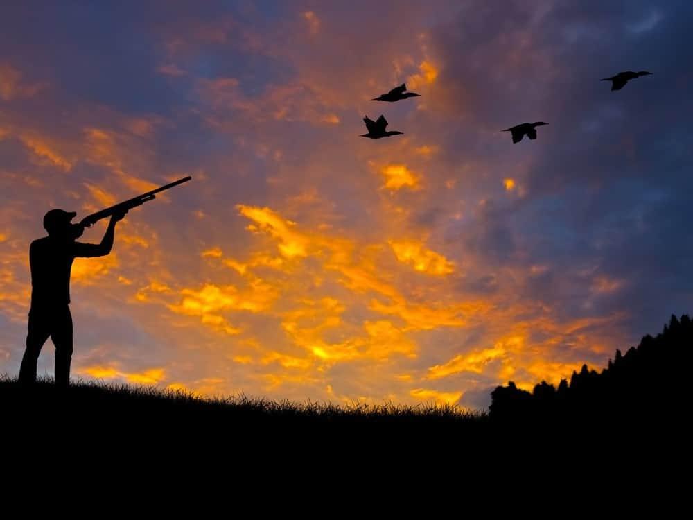 hunting_ducks